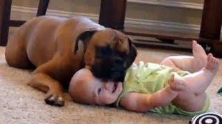 Lustige Babys Lachen hysterisch auf Hunde und Katzen Compilation 2015 [HD VIDEO]