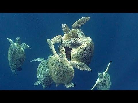 Sea Turtles HD JONATHAN BIRD S BLUE WORLD