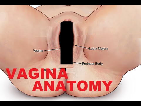 Vagina And Female Reproductive System Anatomy