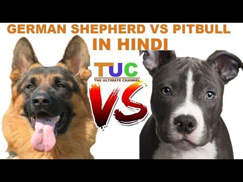 Xxx Mp4 German Shepherd Vs Pitbull In Hindi Dog Comparison The Ultimate Channel 3gp Sex