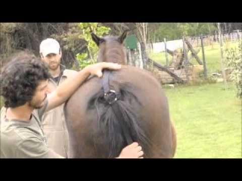 levantador de manos y patas para caballos complicados
