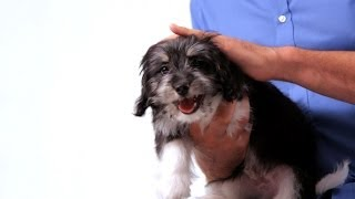 How to Deal with a Fearful Puppy | Puppy Care