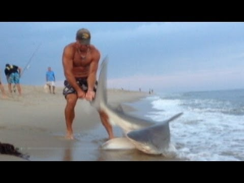 Man Wrestles Shark With Bare Hands Caught on Tape Good Morning America ABC News