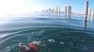 New Year's Dive - Spearfishing with a Hawaiian Sling - Miami Beach