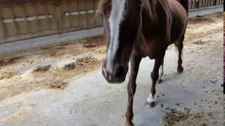 Katrena Video 2
