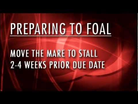 Preparing to Foal