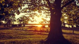 Relaxing Piano Music Most Wonderful and Beautiful music Long Playlist Peaceful Piano