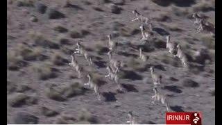 Iran Wildlife & Natural protected areas مناطق حفاظت شده طبيعي و زندگي وحوش ايران
