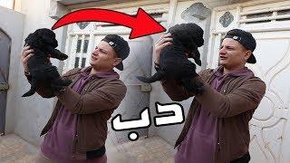 كلبي تاز صار دب !!! (شوفو كيف صار)
