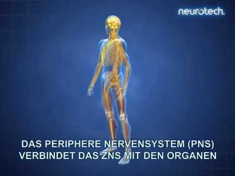 Xxx Mp4 Grundlagen 1 Das Nervensystem ZNS PNS Neurotech 3gp Sex
