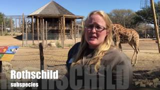 Dear April the Giraffe: What to Expect When You
