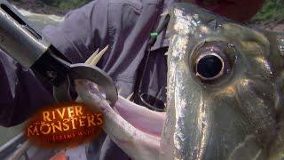 The Payara - River Monsters