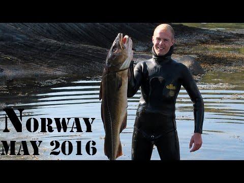 Undervandsjagt i de salte norske strømme, maj 2016