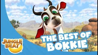 The Best of Bokkie - Jungle Beat Compilation [Full Episodes]