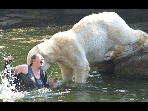 10 People who Fell into Animal Enclosures at Zoos
