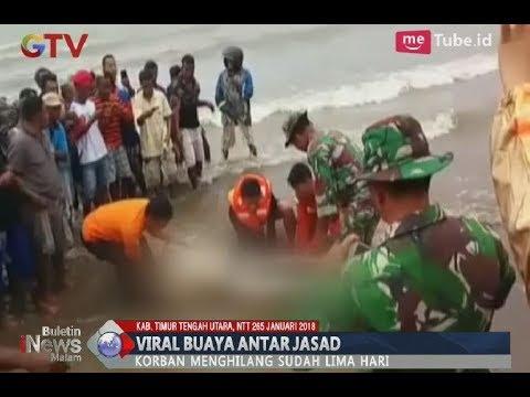 Viral!! Seekor Buaya Mengantar Mayat Ke Pinggir Pantai Nino NTT - BIM 2501