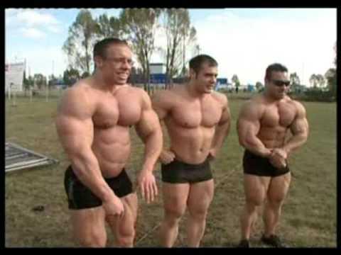 Hungarian Bulls