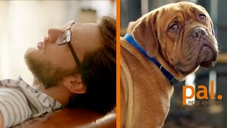 Signs Your Pet Is Your Therapist // Presented By BuzzFeed & Pets Add Life