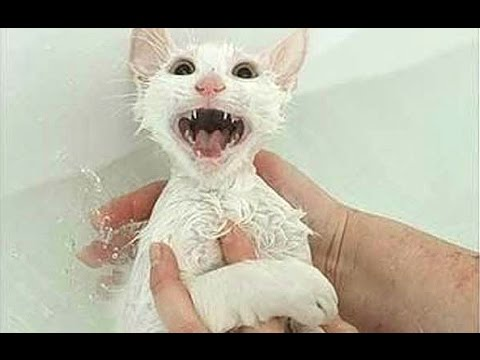 """Cats Saying """"No"""" to Bath - A Funny Cats In Water Compilation"""