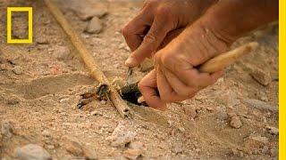 Scorpion Kill Survival Skills | The Great Human Race