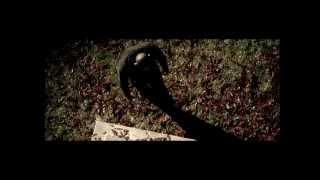 Sinik Feat. Kayna Samet - De Tout La Haut (Clip Officiel HD)