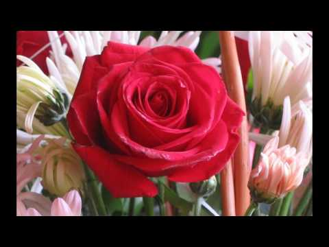 Xxx Mp4 Roses Flower Love 3gp Sex