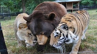 Animals ADOPTING Other Animal Species!