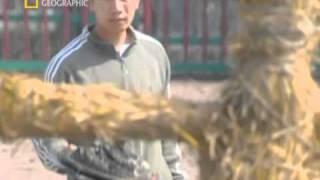 Kung Fu Killers Die Waffen des Kung Fu Teil 5