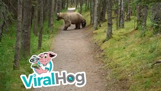 Hiking With Bears