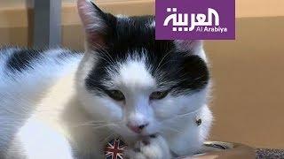 صباح العربية: قط بوظيفة دبوماسية في الأردن