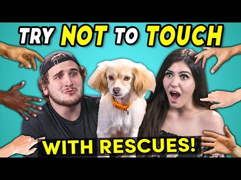 Try Not To Touch Challenge ft. Rescue Animals Best Friends