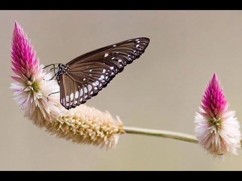 Oh Butterfly Tamil Karaoke For Male Singers