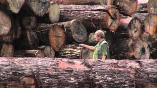 Corte não-autorizado de madeira em área de assentamento do Incra
