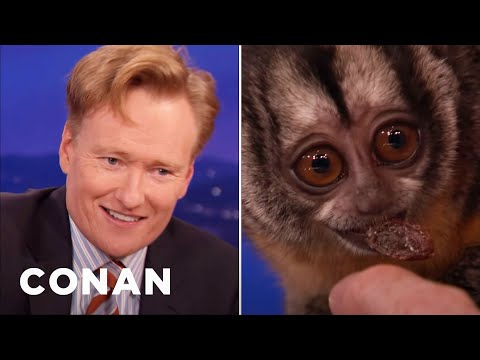 Conan Tangles With An Owl Monkey