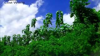Amar Rajjo To Nei Achhe-Andrew Kishore