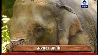 Jungle: Watch story of