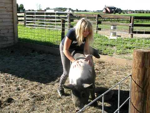 Carla the pig riding cowgirl