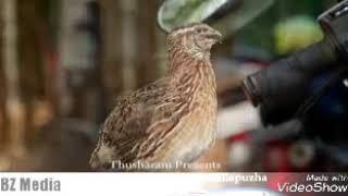 കാടകൃഷി തുടക്കകാർക്ക് Quail farming