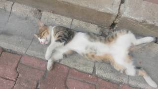Kendinden geçmiş sokak kedisinin merak uyandıran hali