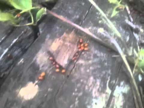 Xxx Mp4 Ladybug Group Sex 3gp Sex