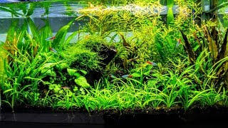 How To Aquascape A Low Tech Planted Aquarium part 1