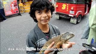 Iguana of an English Speaking Guatemalan Boy