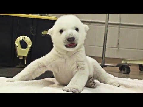 Zoo animals: Baby polar bear cub, fox-woman, giraffes, penguins, pandas and more - Compilation