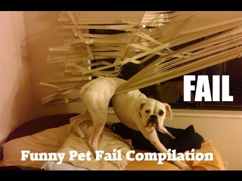 ANIMAL FAILS 😂 FUNNY PET Fails Compilation [Funny Pets]