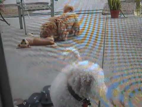 Xxx Mp4 My Dogs And My Sister S Bf Dog Playing Outside In The Backyard Lol 3gp Sex