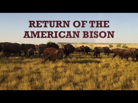 Xxx Mp4 Return Of The American Bison 3gp Sex