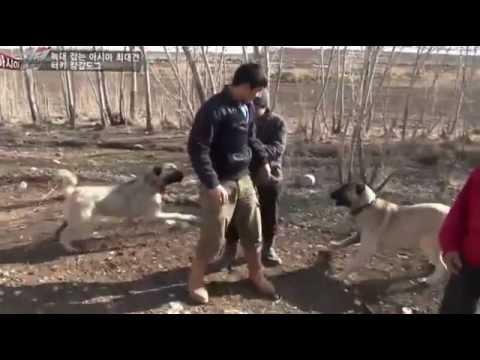 panter kangallar BARIŞ ÇİÇEK