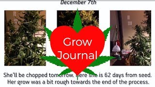 Grow Journal: Growing More ILGM Blueberries