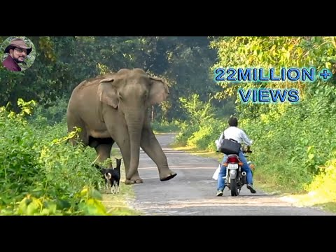 Xxx Mp4 Elephant Suddenly Appeared In Front Of A Biker 3gp Sex