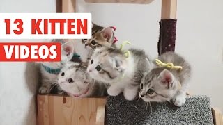 13 Funny Kittens | Cat Video Compilation 2017